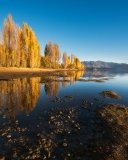 Fall Trees Wanaka