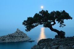 Juniper Tree with Moonlight