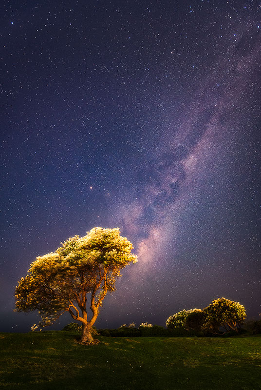 Night Stars With Tree