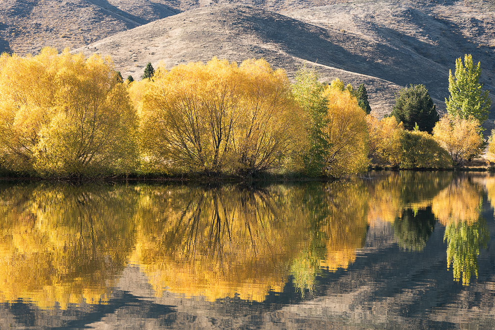 twizel fall trees