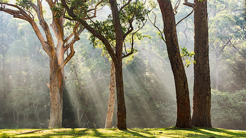 forest photography sunrays